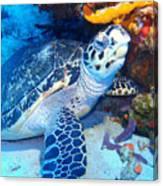 Tucked Away Turtle Canvas Print