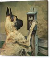 Tucker And The Birdhouse Canvas Print
