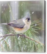 Tufted Titmouse - A Winter Delight Canvas Print