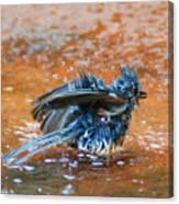 Tufted Titmouse Bath Canvas Print