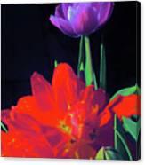 Tulip 15 Canvas Print