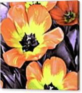 Tulip 16 Canvas Print