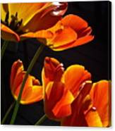 Tulip 38 Canvas Print