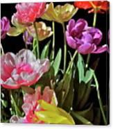 Tulip 8 Canvas Print