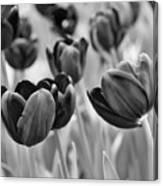 Tulip 84 Canvas Print