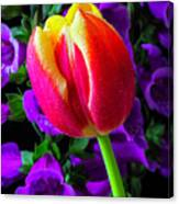 Tulip And Foxglove Canvas Print