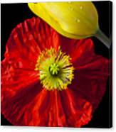 Tulip And Iceland Poppy Canvas Print