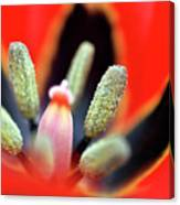 Tulip At Amatzia Forest - 5 Canvas Print