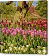 Tulip Bed At Longwood Gardens In Pa Canvas Print