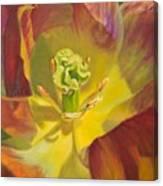 Tulip Closeup No. 1 Canvas Print