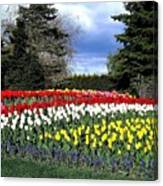 Tulip Country Canvas Print