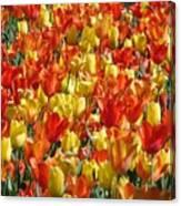 Tulip Delight 1 Canvas Print