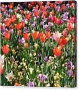 Tulip Delight 2 Canvas Print