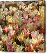Tulip Delight 3 Canvas Print