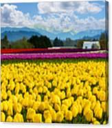Tulip Festival  Canvas Print