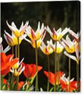 Tulip Field 11 Canvas Print