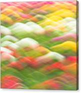 Tulip Field Abstract - Holland Michigan Canvas Print