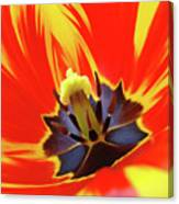 Tulip Flower Floral Art Print Red Yellow Tulips Baslee Troutman Canvas Print