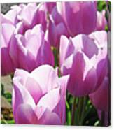 Tulip Garden Flowers Purple Lavender Pastel Art Baslee Troutman Canvas Print