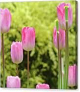 Tulip Garden Landscape Art Prints Pink Tulips Floral Baslee Troutman Canvas Print