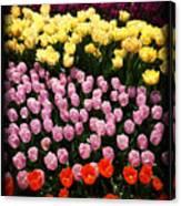 Tulip Greeting Card Canvas Print