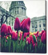 Tulip In Bloom Canvas Print
