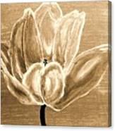Tulip In Brown Tones Canvas Print