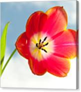 Tulip In The Sky Canvas Print