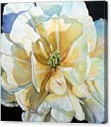 Tulip Intimate Canvas Print