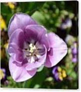 Tulip Lavender Canvas Print