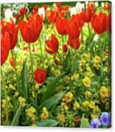 Tulip Lawn On The Flower Island Mainau. Germany. Canvas Print
