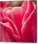 Tulip Layers Canvas Print