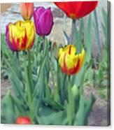 Tulip Mixture Canvas Print