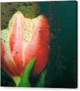 Tulip Of Love Canvas Print