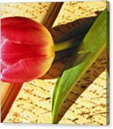 Tulip On An Open Antique Book Canvas Print