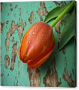 Tulip On Old Green Table Canvas Print