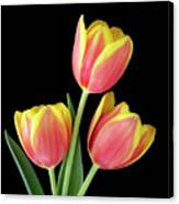 Tulip Passion Canvas Print