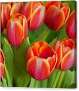 Tulip Patch Canvas Print