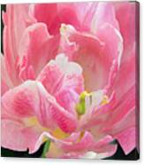 Tulip Peppermint Pink Canvas Print