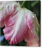 Tulip Perfection Canvas Print
