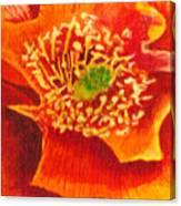 Tulip Prickly Pear Canvas Print