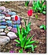 Tulip Rock Garden Canvas Print