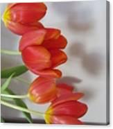Tulip Shadow Canvas Print