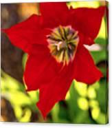 Tulip Star Canvas Print