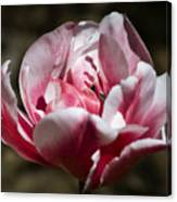 Tulip Surprise Canvas Print