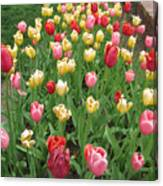 Tulip Time Trail Canvas Print