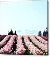 Tulip Town 10 Canvas Print