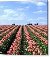 Tulip Town 12 Canvas Print