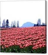 Tulip Town 3 Canvas Print