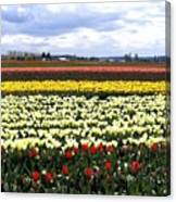 Tulip Town 4 Canvas Print